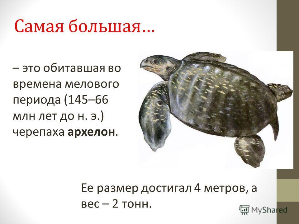 Самая большая… Ее размер достигал 4 метров, а вес – 2 тонн. – это обитавшая во времена мелового периода (145–66 млн лет до н. э.) черепаха архелон.