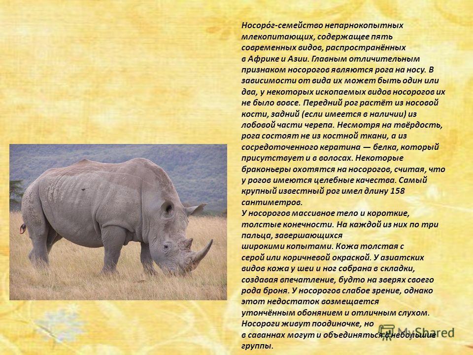 Носоро́г-семейство непарнокопытных млекопитающих, содержащее пять современных видов, распространённых в Африке и Азии. Главным отличительным признаком носорогов являются рога на носу. В зависимости от вида их может быть один или два, у некоторых иско