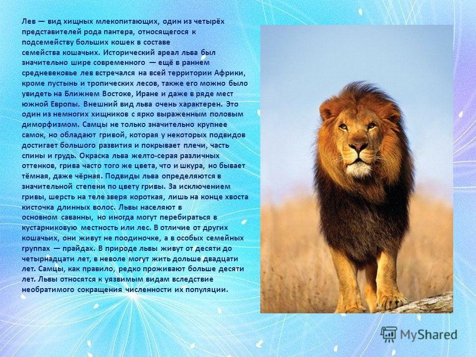 Лев вид хищных млекопитающих, один из четырёх представителей рода пантера, относящегося к подсемейству больших кошек в составе семейства кошачьих. Исторический ареал льва был значительно шире современного ещё в раннем средневековье лев встречался на