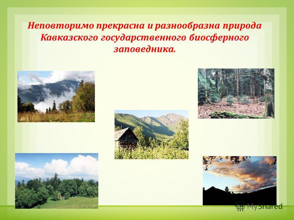 Неповторимо прекрасна и разнообразна природа Кавказского государственного биосферного заповедника.