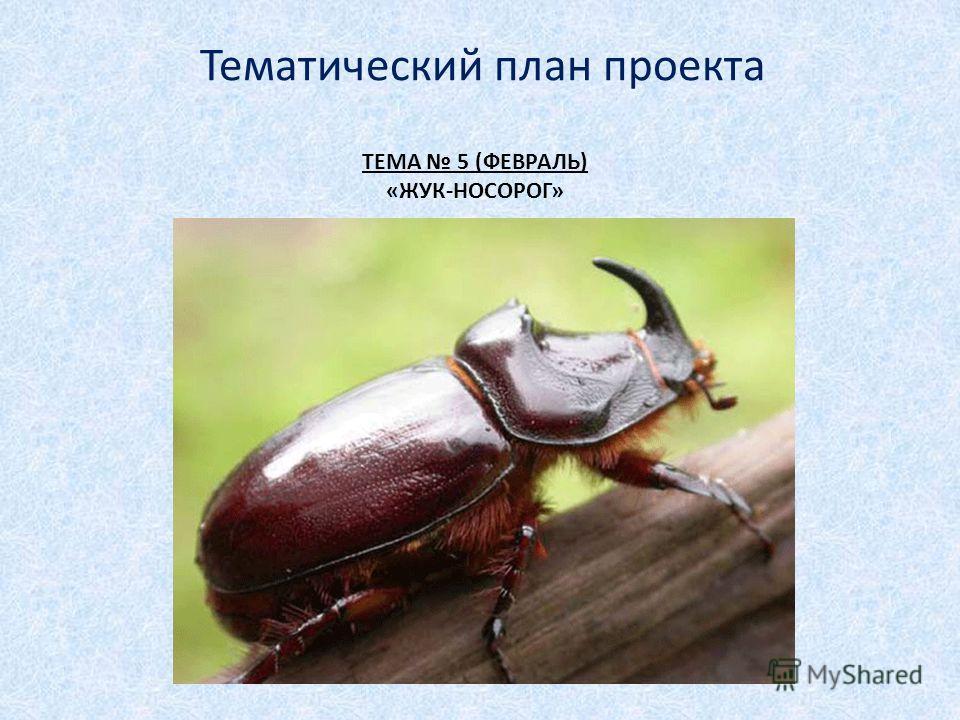 ТЕМА 5 (ФЕВРАЛЬ) «ЖУК-НОСОРОГ» Тематический план проекта