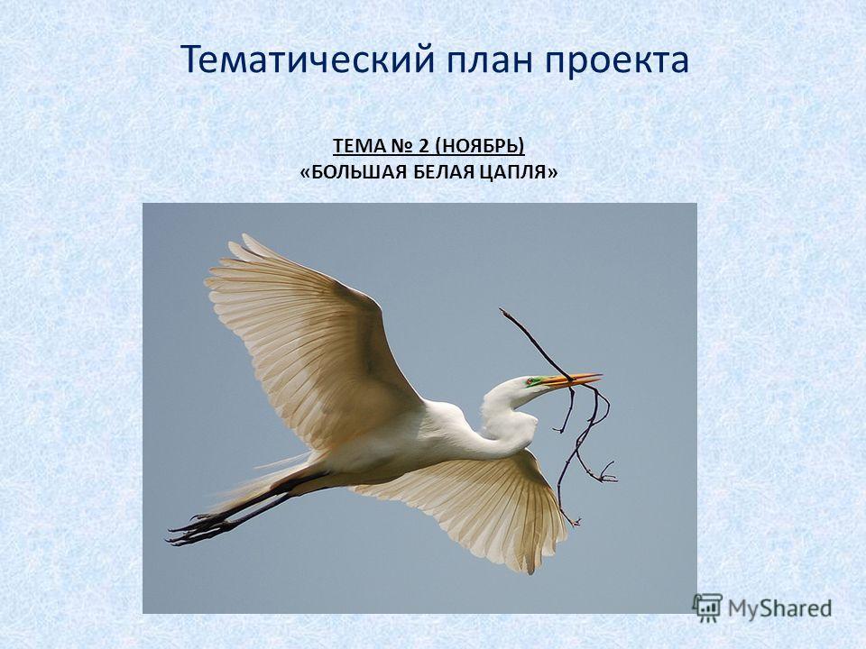 ТЕМА 2 (НОЯБРЬ) «БОЛЬШАЯ БЕЛАЯ ЦАПЛЯ» Тематический план проекта