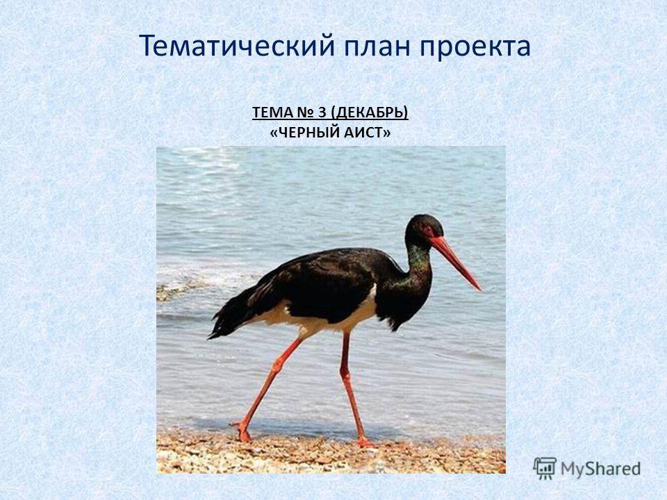 ТЕМА 3 (ДЕКАБРЬ) «ЧЕРНЫЙ АИСТ» Тематический план проекта
