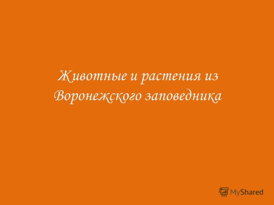 Животные и растения из Воронежского заповедника