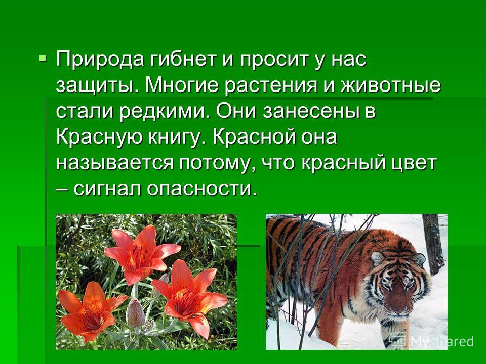 Природа гибнет и просит у нас защиты. Многие растения и животные стали редкими. Они занесены в Красную книгу. Красной она называется потому, что красный цвет – сигнал опасности. Природа гибнет и просит у нас защиты. Многие растения и животные стали р