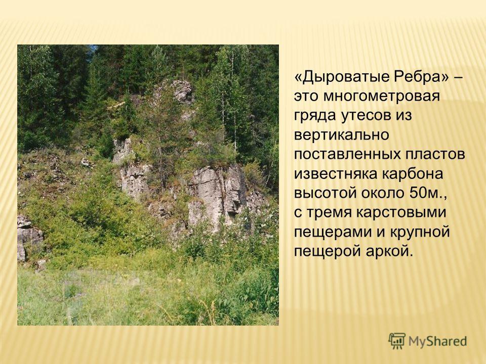 «Дыроватые Ребра» – это многометровая гряда утесов из вертикально поставленных пластов известняка карбона высотой около 50 м., с тремя карстовыми пещерами и крупной пещерой аркой.