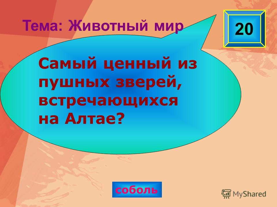 соболь 20 Самый ценный из пушных зверей, встречающихся на Алтае? Тема: Животный мир