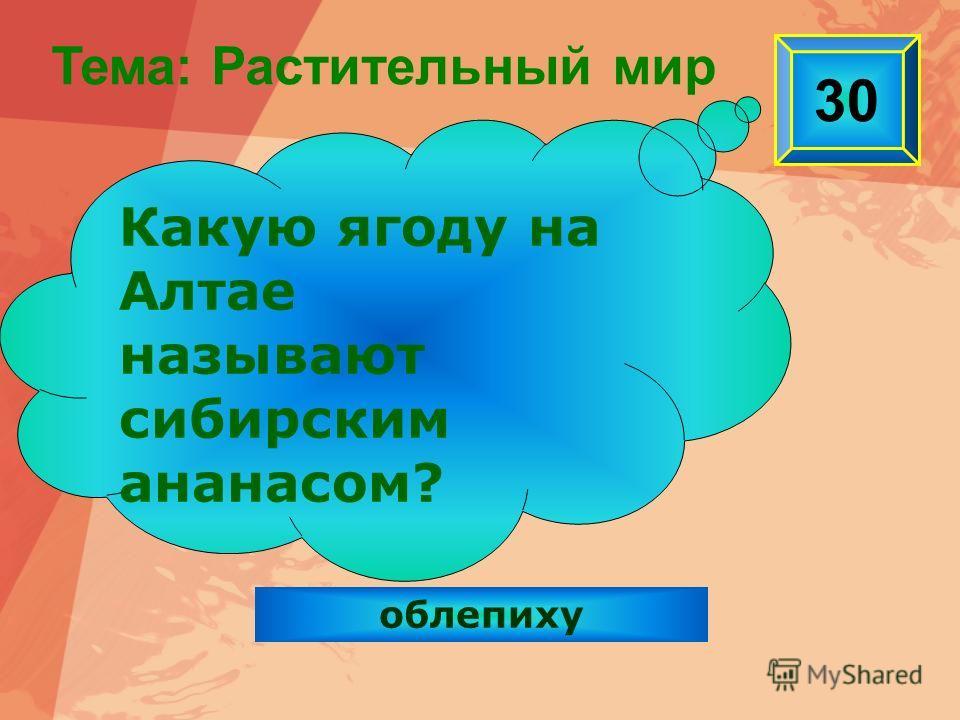 облепиху 30 Какую ягоду на Алтае называют сибирским ананасом? Тема: Растительный мир