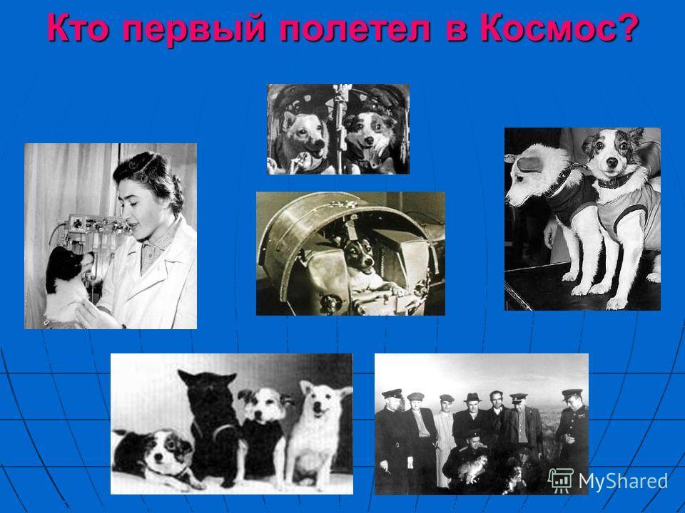 Кто первый полетел в Космос? Первой полетела в космос собака Лайка. Она провела на борту искусственного спутника несколько суток, но ее не смогли вернуть на Землю. В августе 1960 года в космическое путешествие отправились собаки Белка и Стрелка. На к