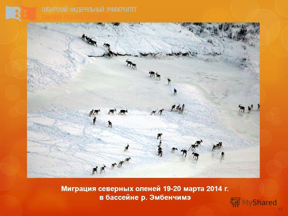 13 Миграция северных оленей 19-20 марта 2014 г. в бассейне р. Эмбенчимэ