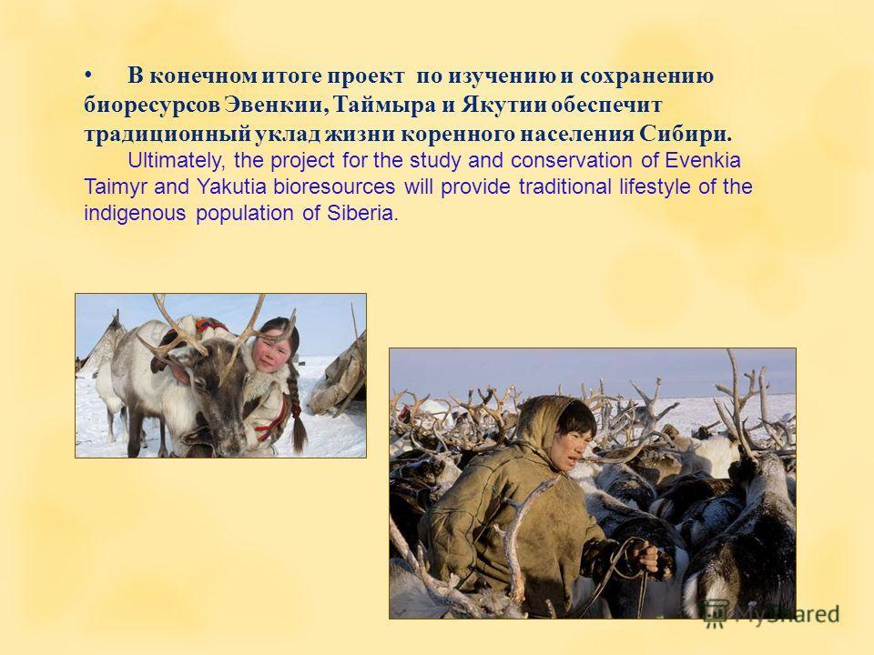 В конечном итоге проект по изучению и сохранению биоресурсов Эвенкии, Таймыра и Якутии обеспечит традиционный уклад жизни коренного населения Сибири. Ultimately, the project for the study and conservation of Evenkia Taimyr and Yakutia bioresources wi