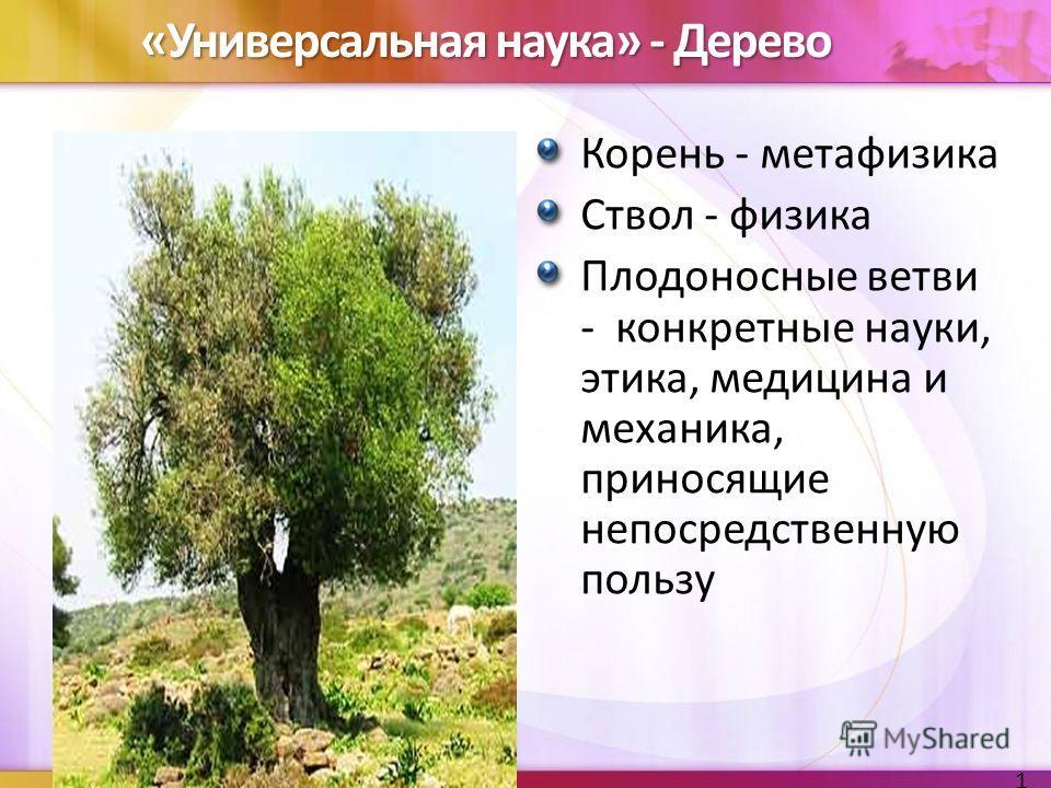 «Универсальная наука» - Дерево Корень - метафизика Ствол - физика Плодоносные ветви - конкретные науки, этика, медицина и механика, приносящие непосредственную пользу 19