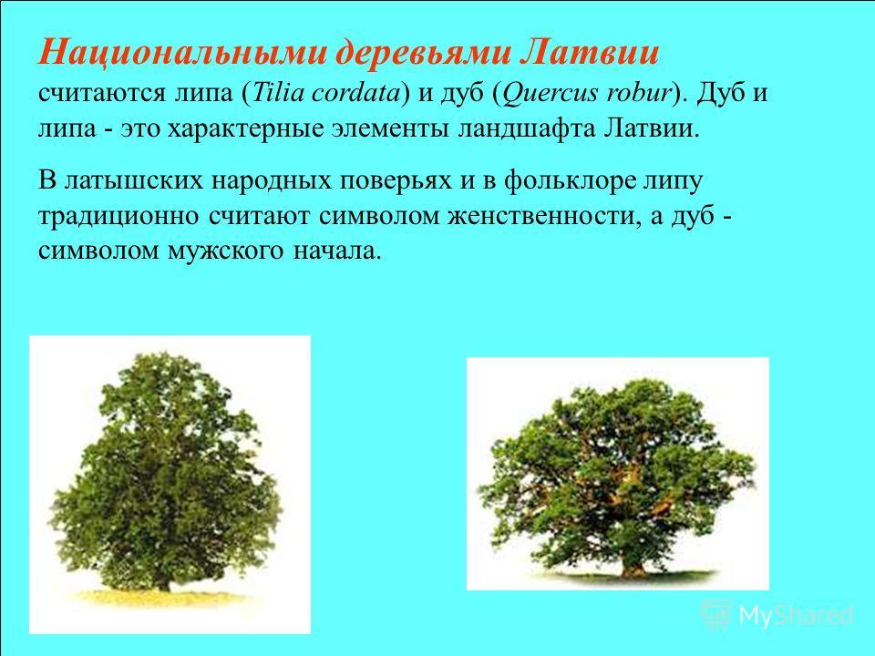 Национальнами деревьями Латвии считаются липа (Tilia cordata) и дуб (Quercus robur). Дуб и липа - это характернае элементы ландшафта Латвии. В латышских народнах поверьях и в фольклоре липу традиционно считают символом женственности, а дуб - символом