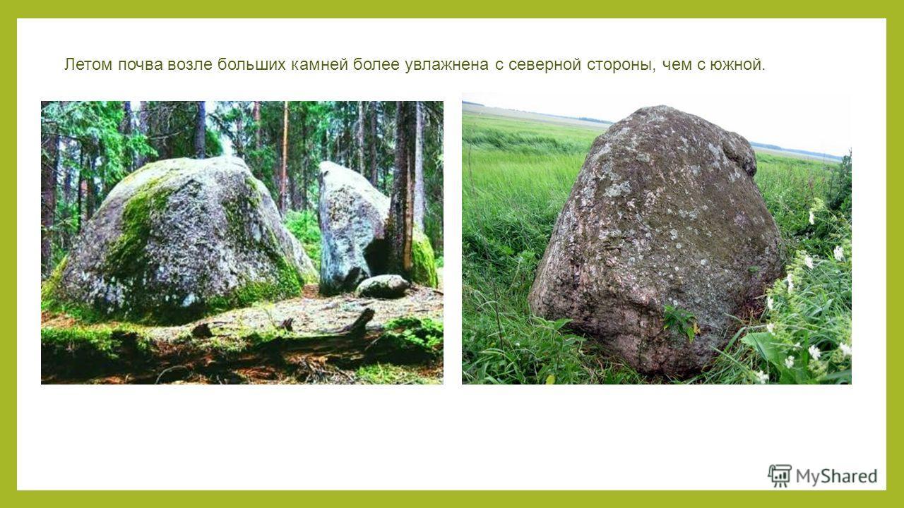 Летом почва возле больших камней более увлажнена с северной стороны, чем с южной.