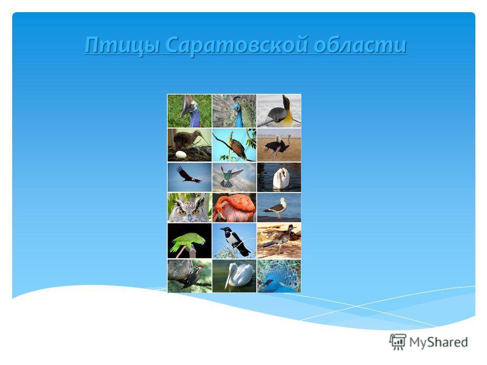 Птицы Саратовской области