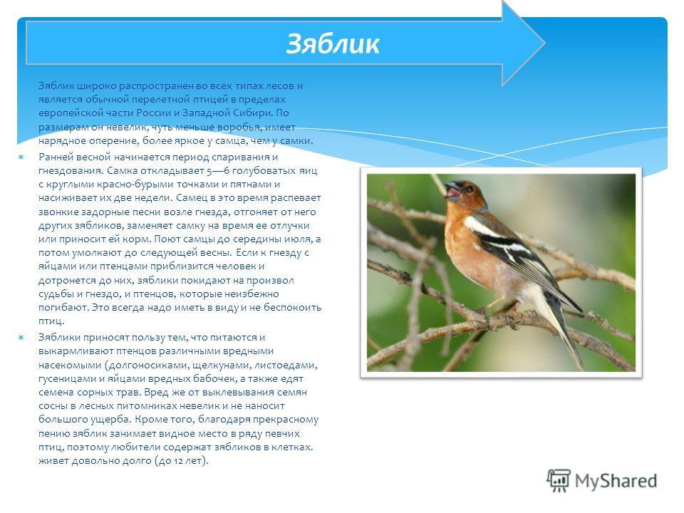 Зяблик широко распространен во всех типах лесов и является обычной перелетной птицей в пределах европейской части России и Западной Сибири. По размерам он невелик, чуть меньше воробья, имеет нарядное оперение, более яркое у самца, чем у самки. Ранней