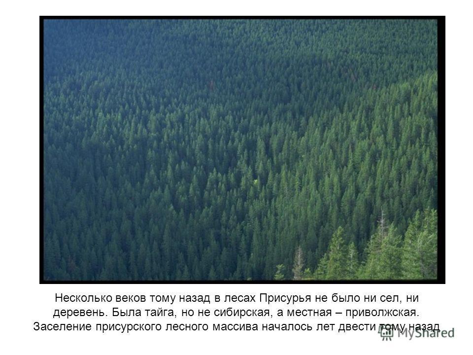 Несколько веков тому назад в лесах Присурья не было ни сел, ни деревень. Была тайга, но не сибирская, а местная – приволжская. Заселение присурского лесного массива началось лет двести тому назад