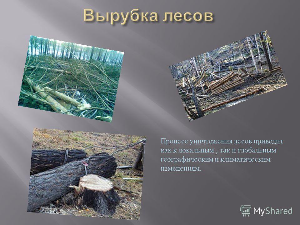 Процесс уничтожения лесов приводит как к локальным, так и глобальным географическим и климатическим изменениям.
