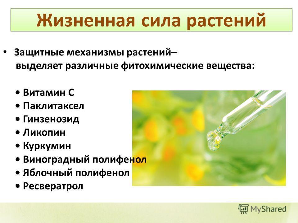 Жизненная сила растений Защитные механизмы растений– выделяет различные фитохимические вещества: Витамин С Паклитаксел Гинзенозид Ликопин Куркумин Виноградный полифенол Яблочный полифенол Ресвератрол