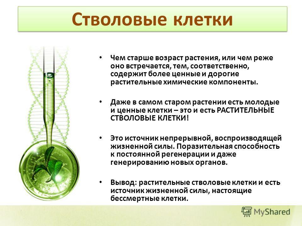 Стволовые клетки Чем старше возраст растения, или чем реже оно встречается, тем, соответственно, содержит более ценные и дорогие растительные химические компоненты. Даже в самом старом растении есть молодые и ценные клетки – это и есть РАСТИТЕЛЬНЫЕ С