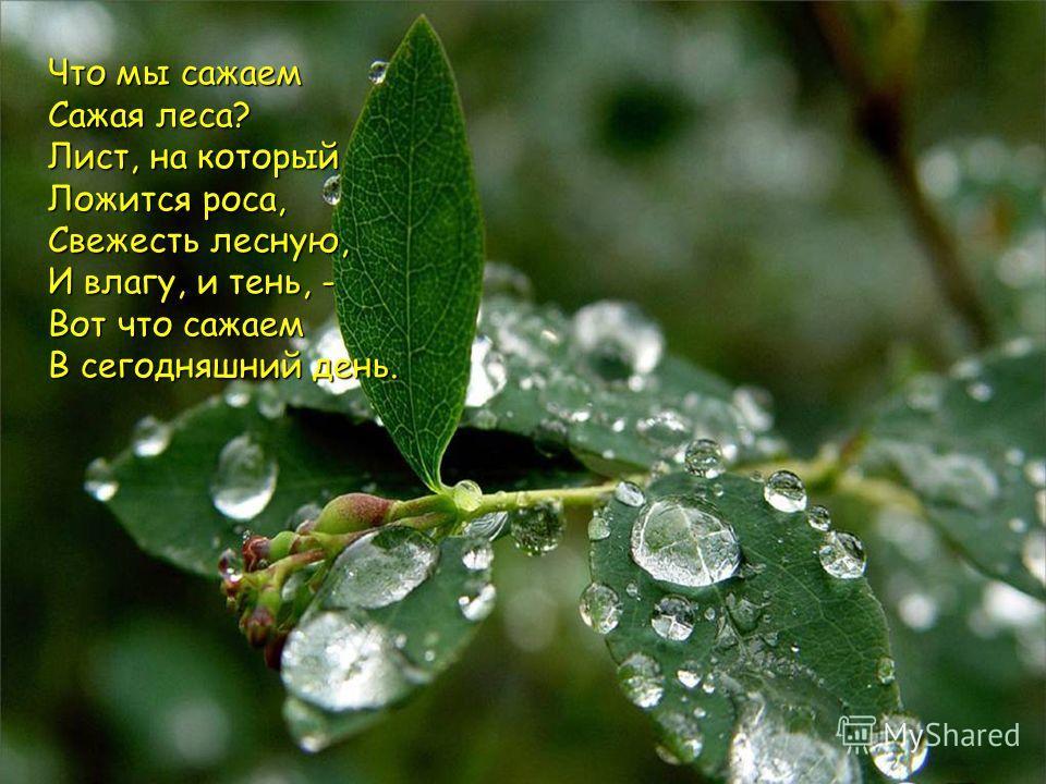 Что мы сажаем Сажая леса? Лист, на который Ложится роса, Свежесть лесную, И влагу, и тень, - Вот что сажаем В сегодняшний день.