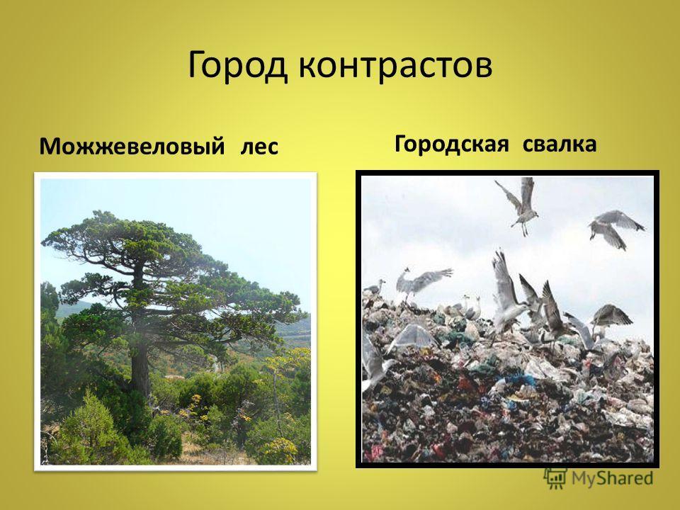Город контрастов Городская свалка Можжевеловый лес