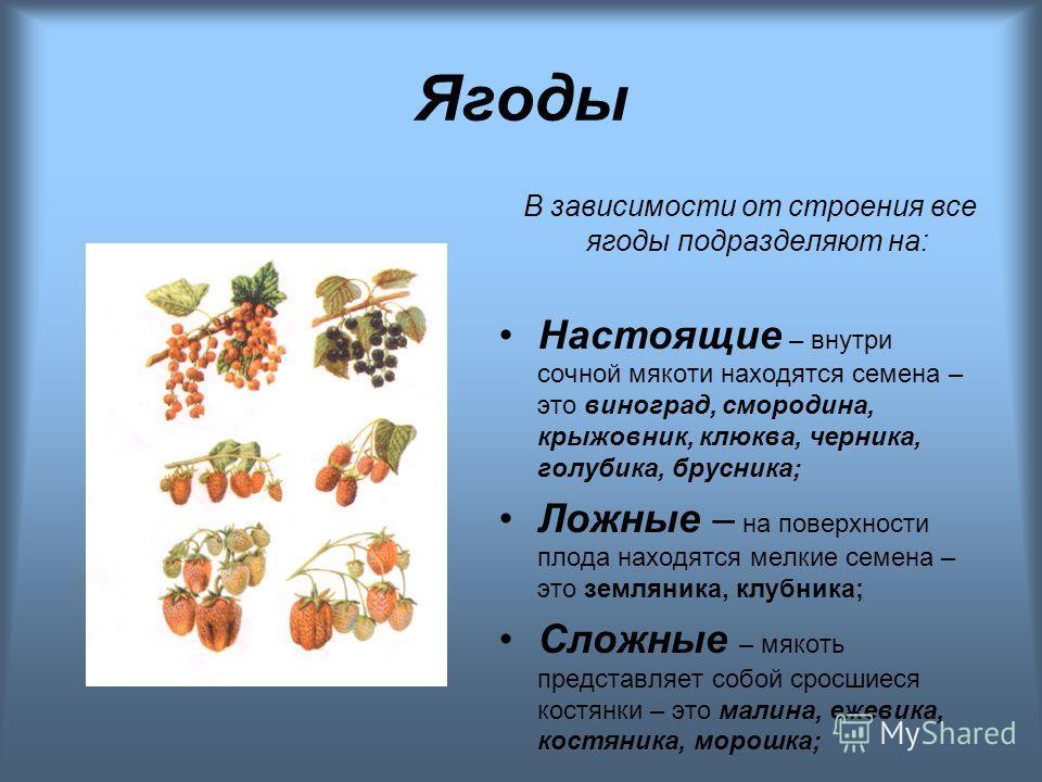 Ягоды В зависимости от строения все ягоды подразделяют на: Настоящие – внутри сочной мякоти находятся семена – это виноград, смородина, крыжовник, клюква, черника, голубика, брусника; Ложные – на поверхности плода находятся мелкие семена – это землян