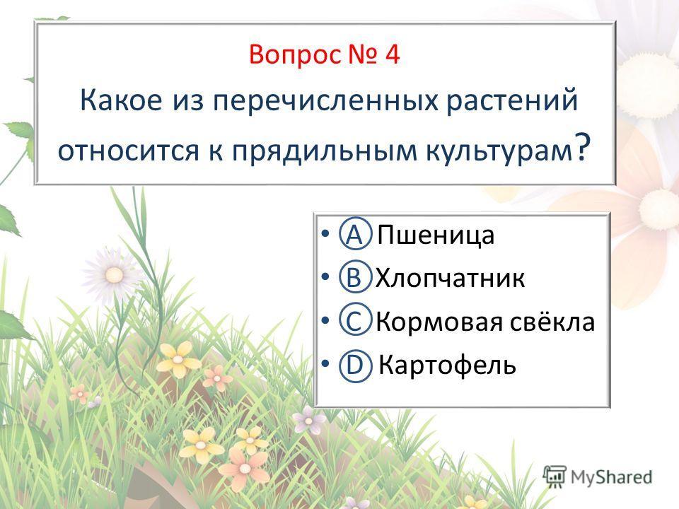 Вопрос 4 Какое из перечисленных растений относится к прядильным культурам ? А Пшеница В Хлопчатник С Кормовая свёкла D Картофель