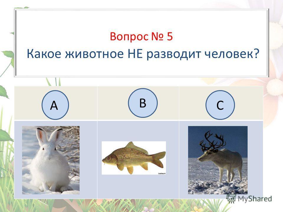 Вопрос 5 Какое животное НЕ разводит человек? А B C
