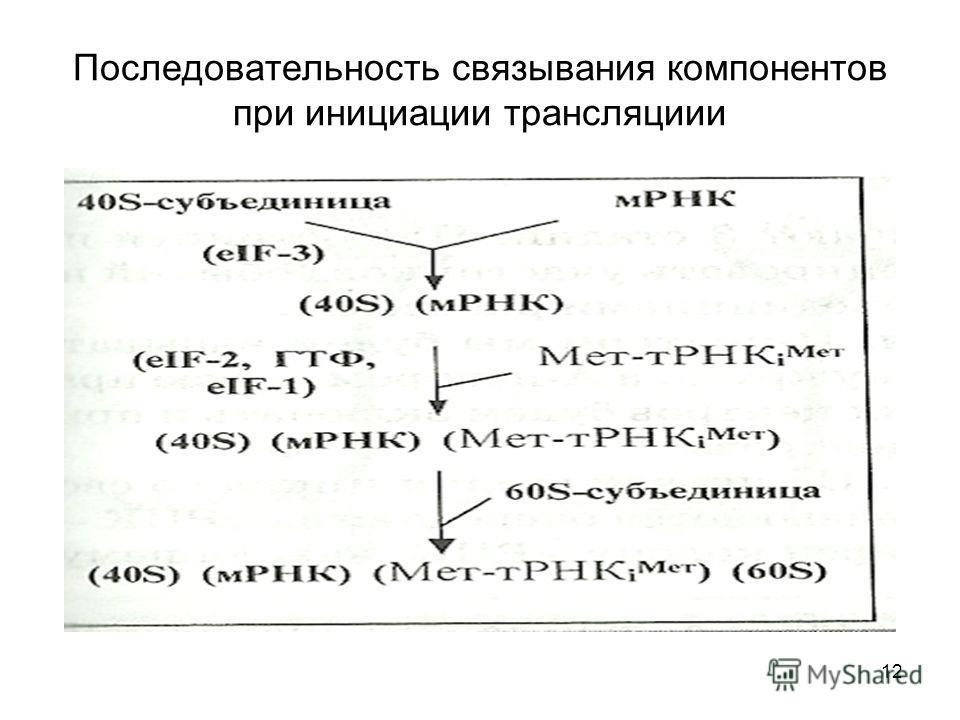 12 Последовательность связывания компонентов при инициации трансляции