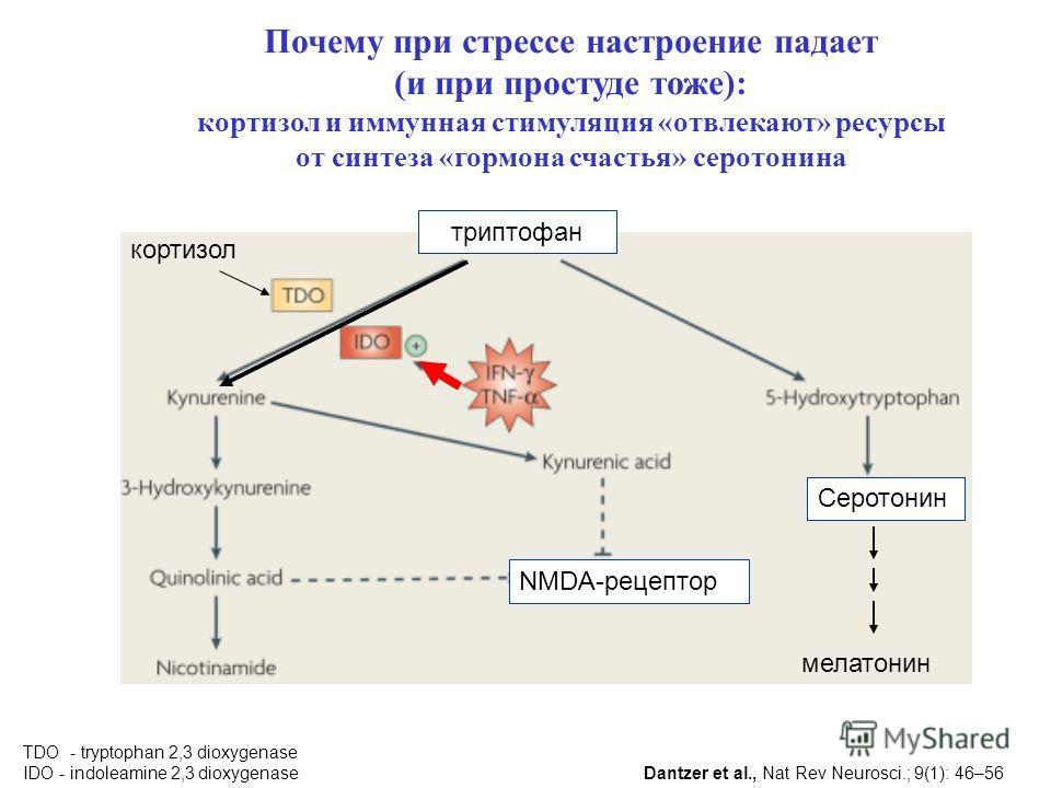 триптофан Серотонин TDO - tryptophan 2,3 dioxygenase IDO - indoleamine 2,3 dioxygenase NMDA-рецептор кортизол Dantzer et al., Nat Rev Neurosci.; 9(1): 46–56 мелатонин Почему при стрессе настроение падает (и при простуде тоже): кортизол и иммунная сти