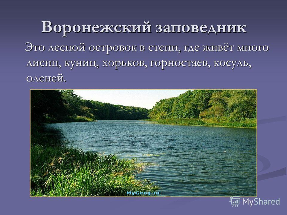 Воронежский заповедник Это лесной островок в степи, где живёт много лисиц, куниц, хорьков, горностаев, косуль, оленей. Это лесной островок в степи, где живёт много лисиц, куниц, хорьков, горностаев, косуль, оленей.