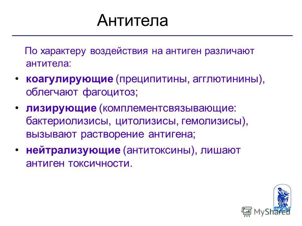 По характеру воздействия на антиген различают антитела: коагулирующие (преципитины, агглютинины), облегчают фагоцитоз; лизирующие (комплементсвязывающие: бактериолизисы, цитолизисы, гемолизины), вызывают растворение антигена; нейтрализующие (антитокс