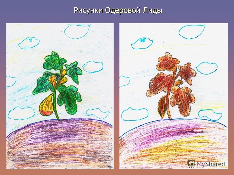 Рисунки Одеровой Лиды