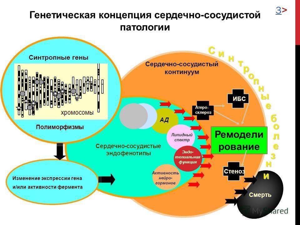 Полиморфизмы Сердечно-сосудистые эндофенотипы АД Липидный спектр Эндо- телиальная функция Активность нейро- гормонов Сердечно-сосудистый континуум Синтропные гены ИБС Стеноз Атеро- склероз Смерть Си н т о н е о л е н и р п ы б з Изменение экспрессии