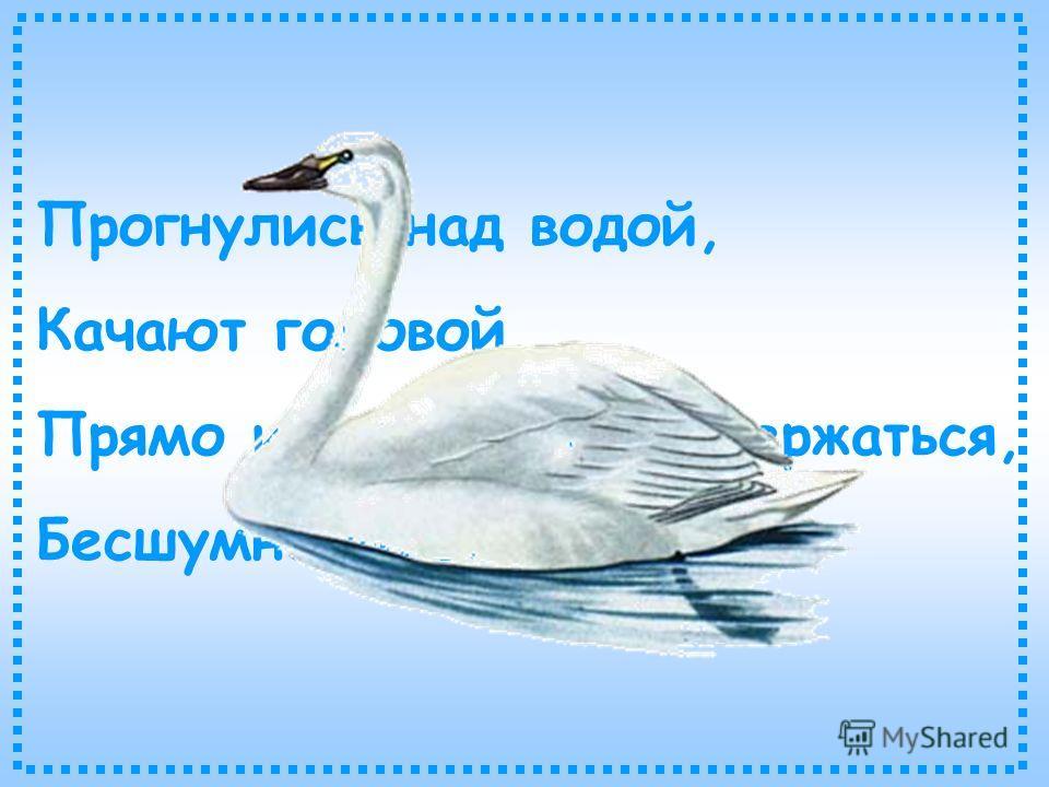 Прогнулись над водой, Качают головой. Прямо и гордо умеют держаться, Бесшумно на воду садятся.