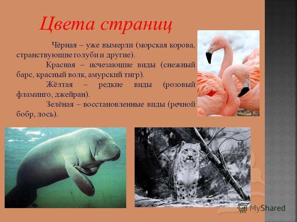 Чёрная – уже вымерли (морская корова, странствующие голуби и другие). Красная – исчезающие виды (снежный барс, красный волк, амурский тигр). Жёлтая – редкие виды (розовый фламинго, джейран). Зелёная – восстановленные виды (речной бобр, лось).