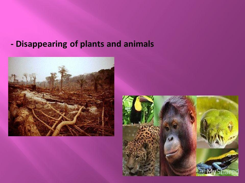 - Disappearing of plants and animals