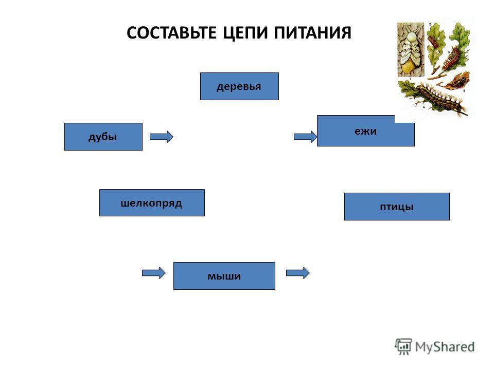 СОСТАВЬТЕ ЦЕПИ ПИТАНИЯ дубы шелкопряд птицы деревья мыши ежи