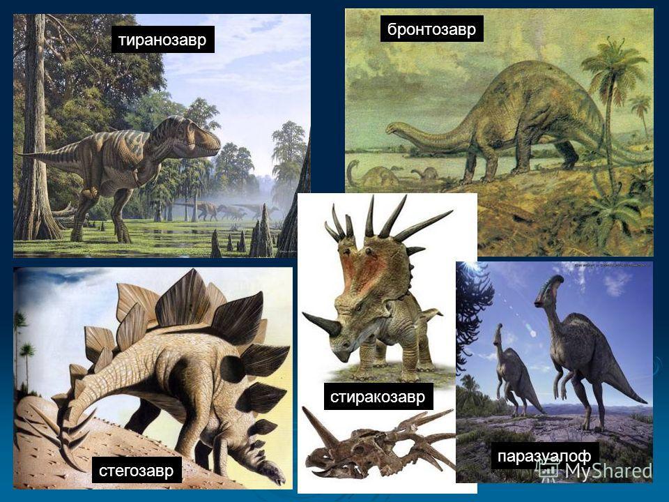 стиракозавр тиранозавр стегозавр бронтозавр паразуалоф
