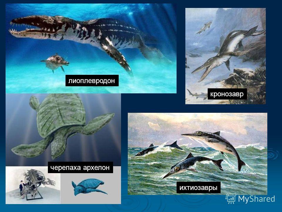 черепаха архелон лиоплевродон ихтиозавры кронозавр