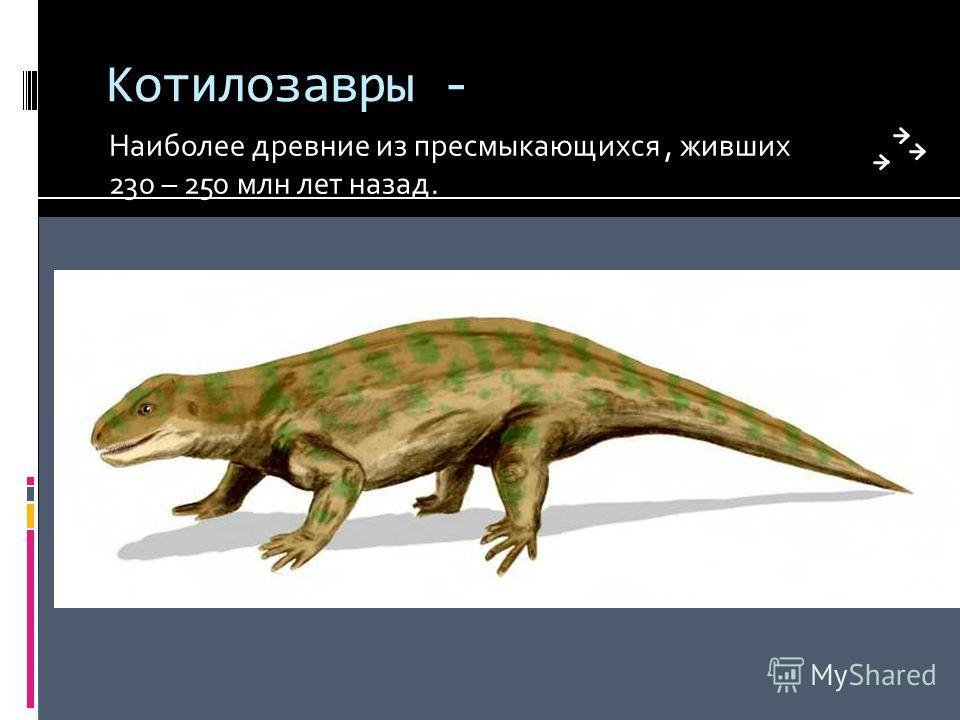 Котилозавры - Наиболее древние из пресмыкающихся, живших 230 – 250 млн лет назад.