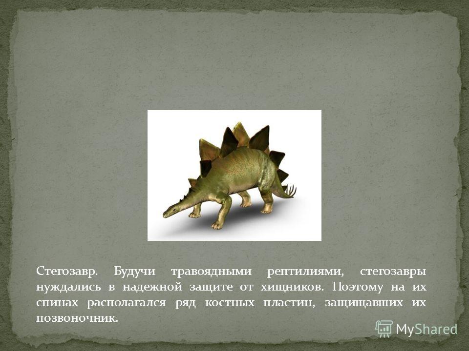 Стегозавр. Будучи травоядными рептилиями, стегозавры нуждались в надежной защите от хищников. Поэтому на их спинах располагался ряд костных пластин, защищавших их позвоночник.