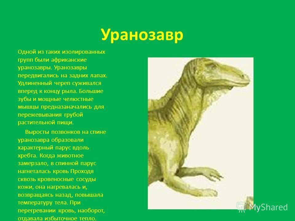 Уранозавр Одной из таких изолированных групп были африканские уранозавры. Уранозавры передвигались на задних лапах. Удлиненный череп суживался вперед к концу рыла. Большие зубы и мощные челюстные мышцы предназаначались для пережевывания грубой растит