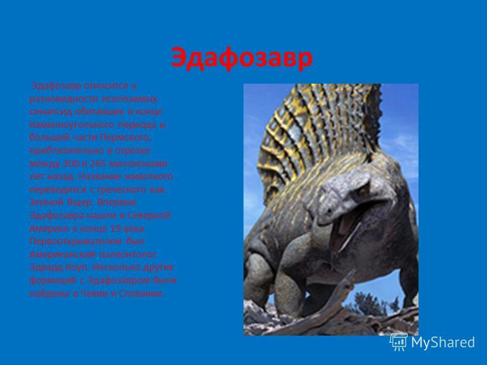Эдафозавр Эдафозавр относится к разновидности ископаемых синапсид обитавших в конце Каменноугольного периода и большей части Пермского, приблизительно в отрезке между 300 и 265 миллионами лет назад. Название животного переводится с греческого как Зем