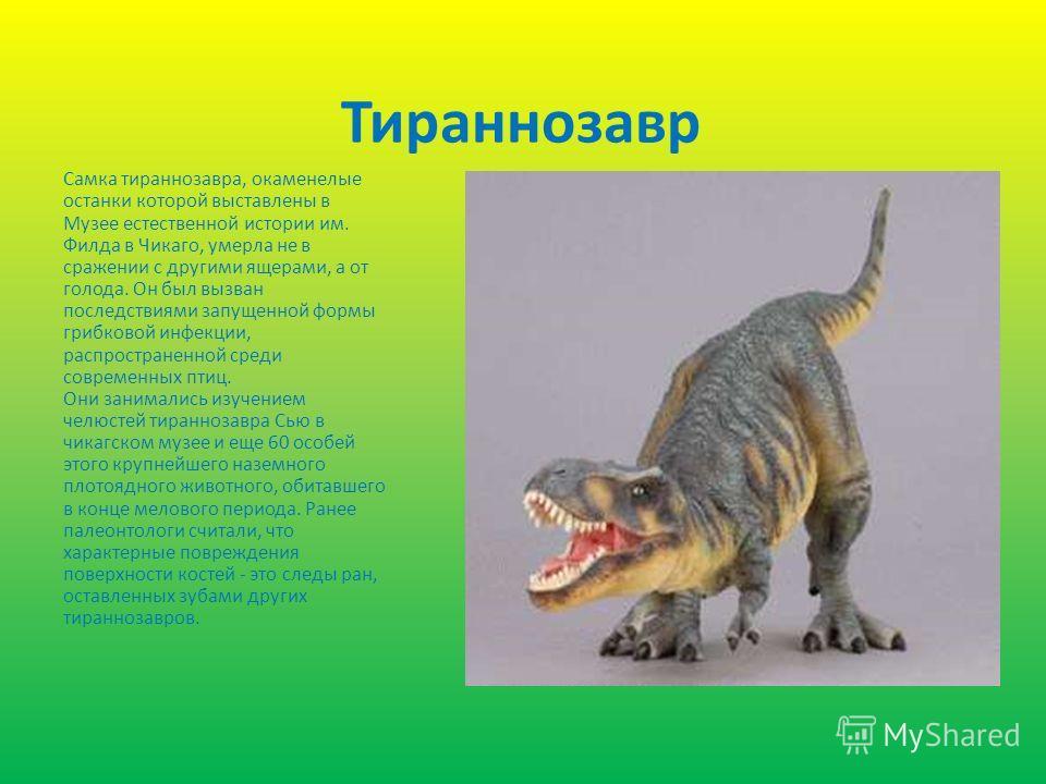 Тираннозавр Самка тираннозавра, окаменелые останки которой выставлены в Музее естественной истории им. Филда в Чикаго, умерла не в сражении с другими ящерами, а от голода. Он был вызван последствиями запущенной формы грибковой инфекции, распространен