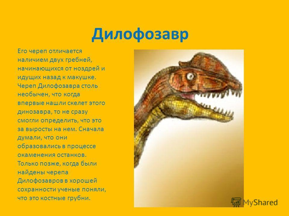 Дилофозавр Его череп отличается наличием двух гребней, начинающихся от ноздрей и идущих назад к макушке. Череп Дилофозавра столь необычен, что когда впервые нашли скелет этого динозавра, то не сразу смогли определить, что это за выросты на нем. Снача