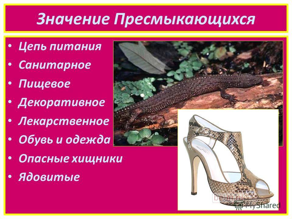 Значение Пресмыкающихся Цепь питания Санитарное Пищевое Декоративное Лекарственное Обувь и одежда Опасные хищники Ядовитые