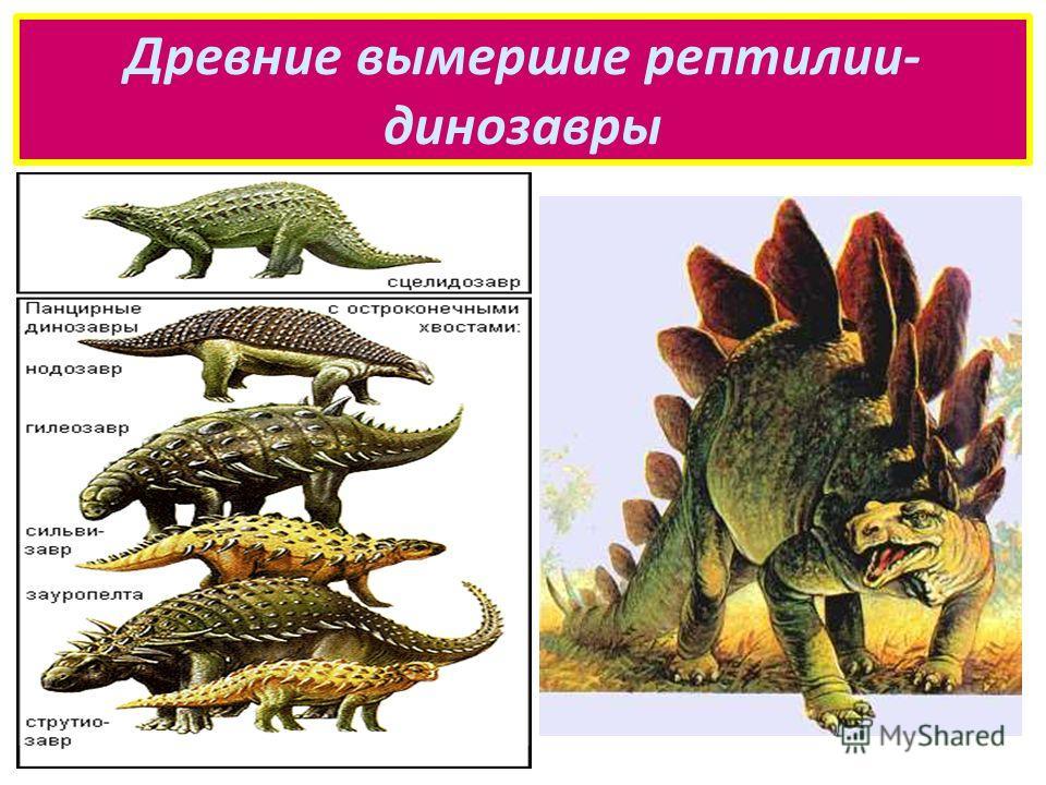 Древние вымершие рептилии- динозавры