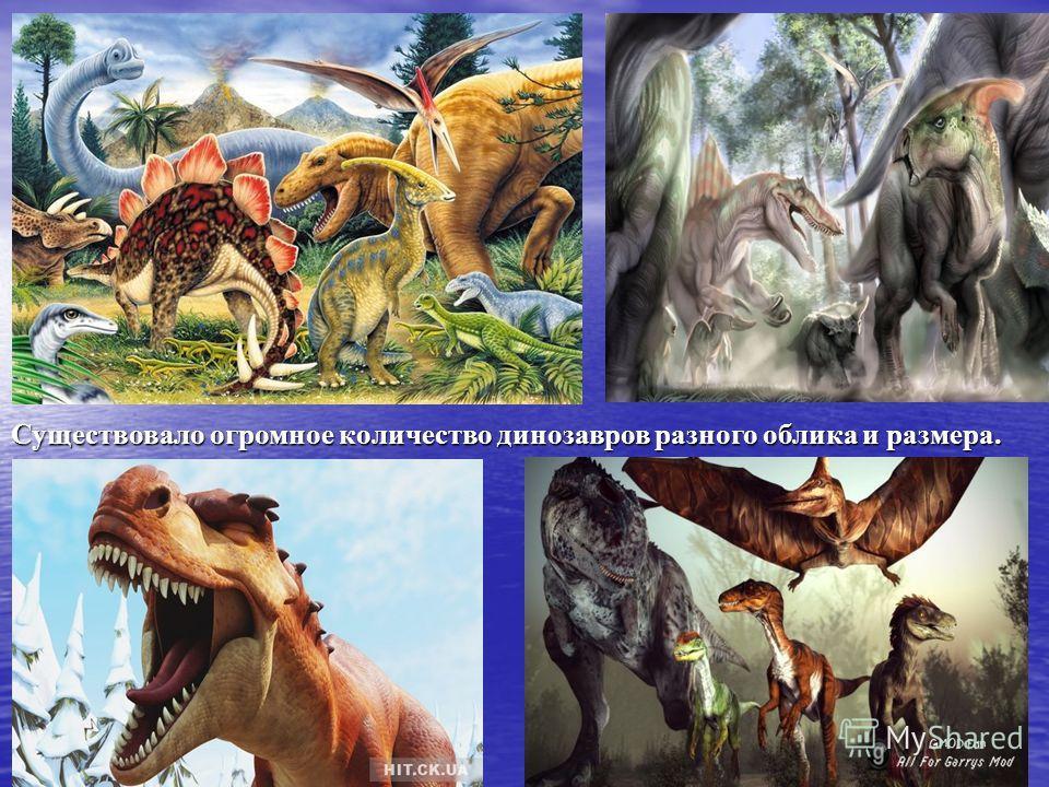 Существовало огромное количество динозавров разного облика и размера.